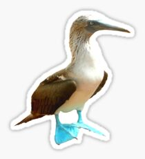 Blue Footed Booby Sticker