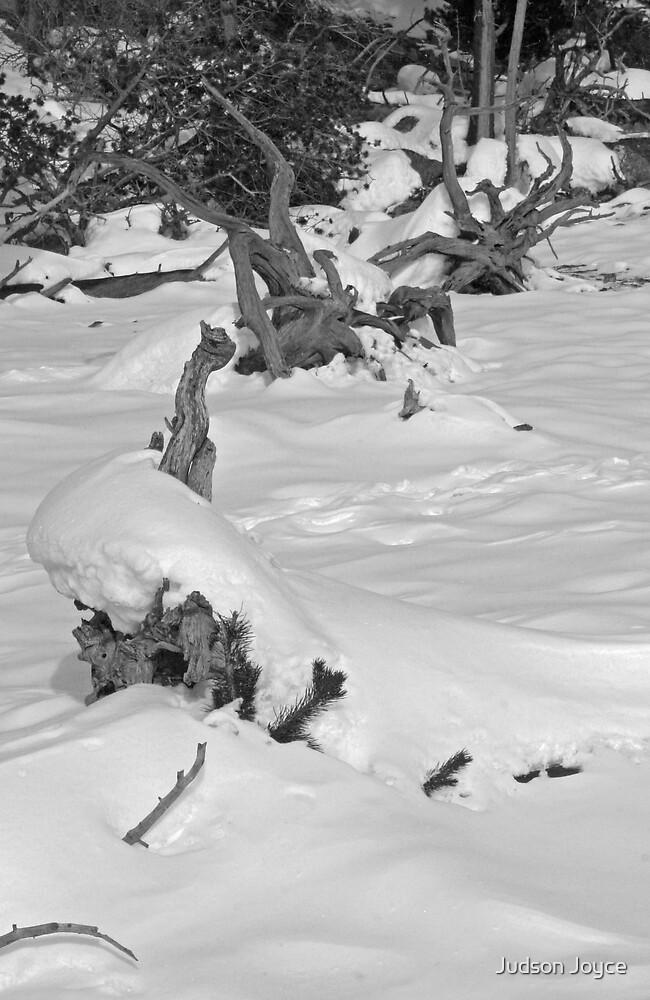 Cold Black & White by Judson Joyce