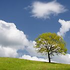 Tree on the Horizon by Kasia-D