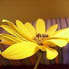 Autumn yellow flower by Ana Belaj