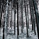 Winter in the forest by Kurt  Tutschek