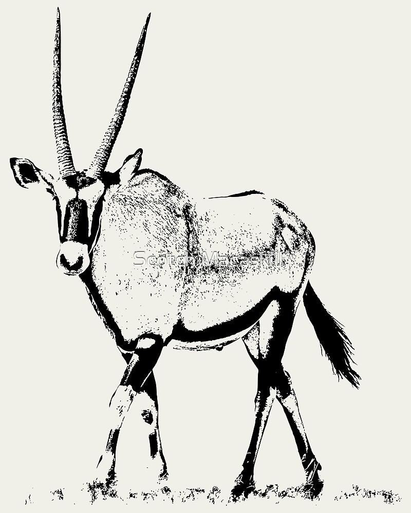 Male Gemsbok | African Wildlife by Scotch Macaskill
