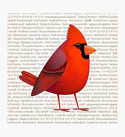 Masked Cardinalis Photographic Print