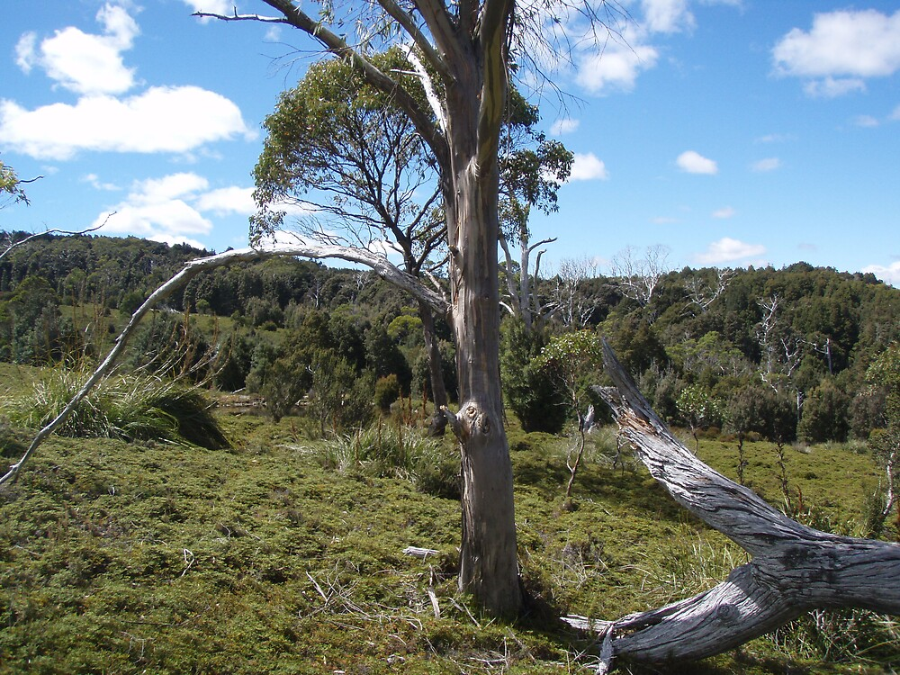 on King Billy track at Cradle Mt today - so peaceful by gaylene