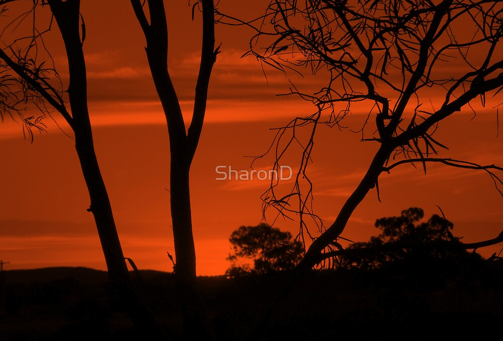 Mono Sunset by SharonD