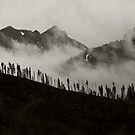 Mountain Mist by dlhedberg