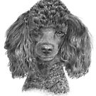 Dog portraits in graphite calendar by doggyshop