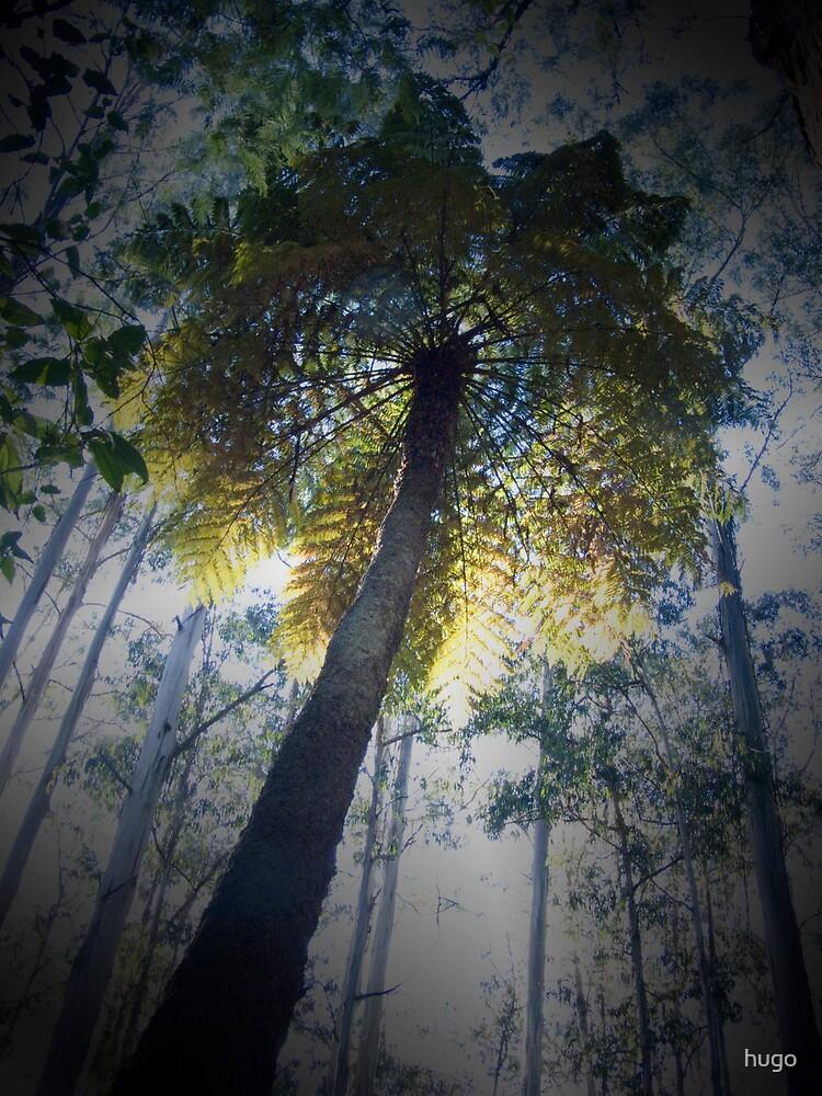DANDENONG'S TREE FERN by hugo