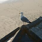 Seagull enjoying the beach by Jagged-designs