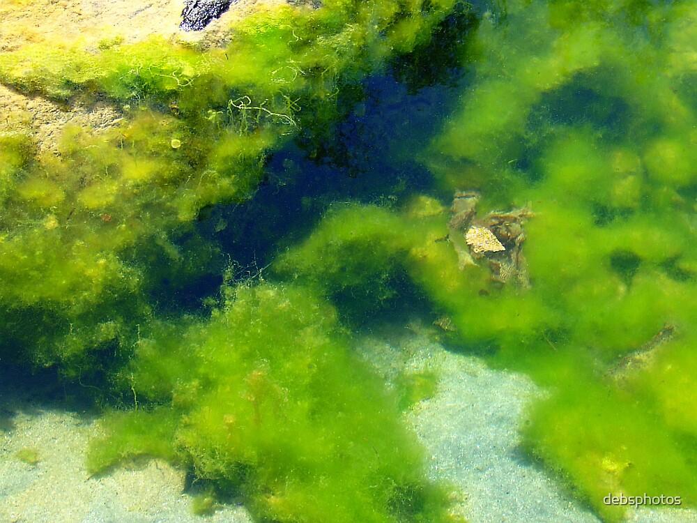 Green Sea Algae.... by debsphotos
