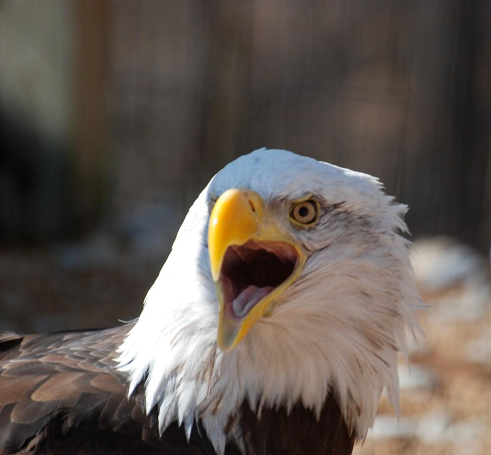 Eagle Tongue by Jim Caldwell