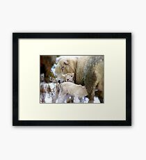 Sorry Love!! You Arrived A Little Earlier Than Expected!!...Lambs - NZ Framed Print