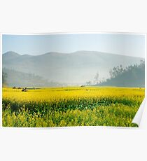 Yellow flowers covered by mist in the evening. Poster