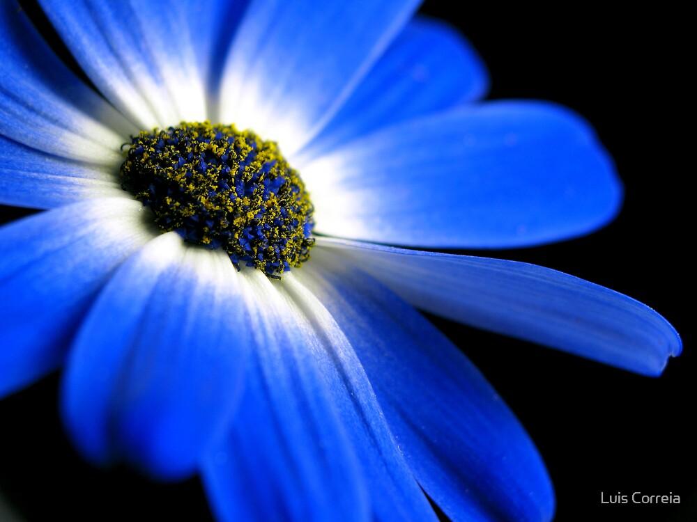 Blue! by Luis Correia