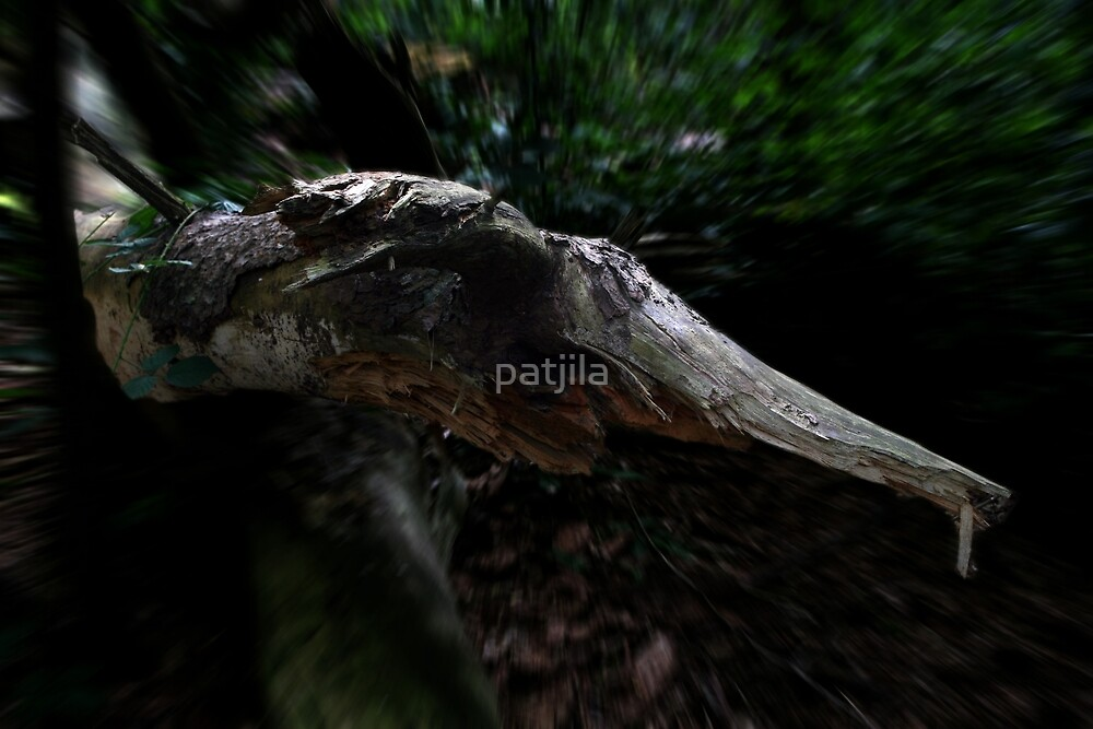 Wood creatures by patjila