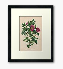 Wild Rose-Available As Art Prints-Mugs,Cases,Duvets,T Shirts,Stickers,etc Framed Print