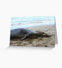 Hawaiian Monk Seal  Greeting Card