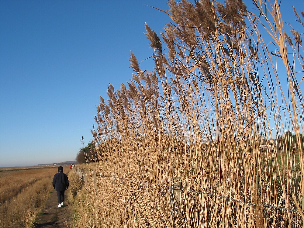 Winter Reeds by Mike Paget