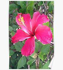 Hawaiian Pink Hibuscus Poster