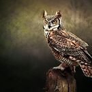 Great Horned Owl by Brian Tarr