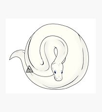 Ball Python (Leucistic) Photographic Print