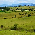 Pastures and The Main Range by Terry Everson