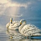 Whoopers by Brian Tarr