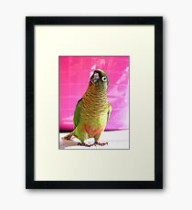 The Washing Is All Done Mum....Bubbles - Maroon-Bellied Conure - NZ Framed Print