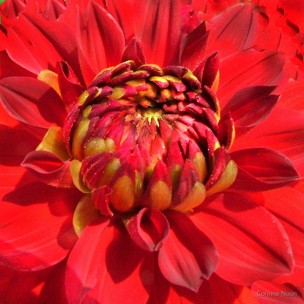 """Popping """"RED"""" by Corinne Noon"""