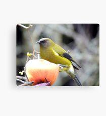 I Can Ring My Bell-ell-ell Ring My Bell!! - Bell-bird Chimes - NZ Canvas Print