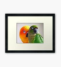 I'm Feeling A Little Camera Shy Bubbles!!...Conure's - NZ Framed Print