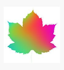 Rainbow leaf patch  Photographic Print