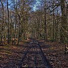 Forest Walk by Andrew Dunwoody