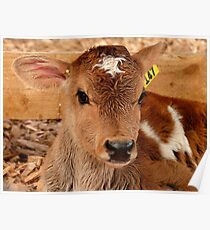 Umm.. If I Win The Beauty Pageant...I Will Promote World Peace...- Calf - NZ Poster