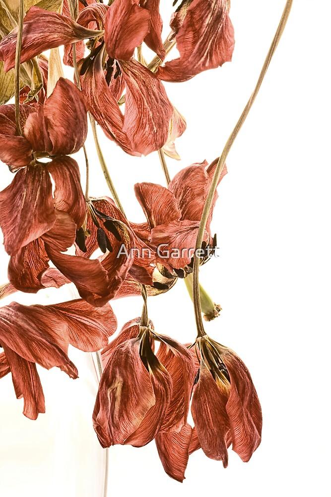 Tangled Tulips by Ann Garrett