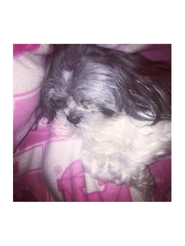 Puppy Love  by pandpmedia