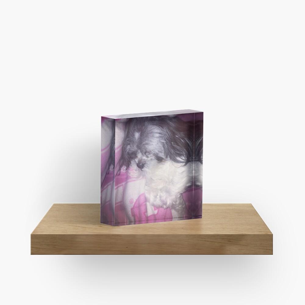 Puppy Love  Acrylic Block