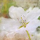 White Winds by Scott Mitchell