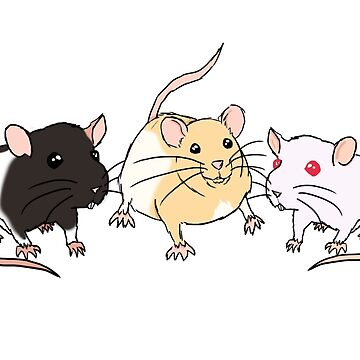 Rats by spiderboom
