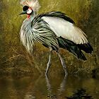 Great Crowned Crane by Brian Tarr