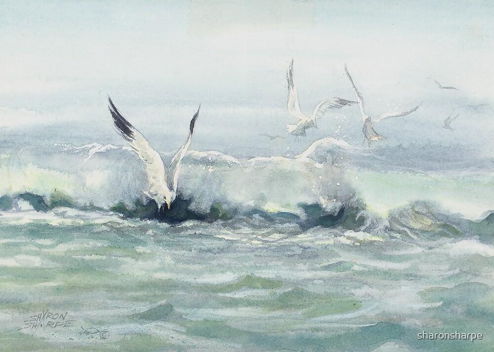 SURF GULLS by SHARON SHARPE by sharonsharpe