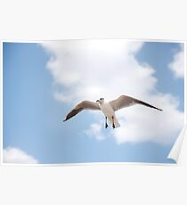Seabird flying and soaring up in the blue air. Poster