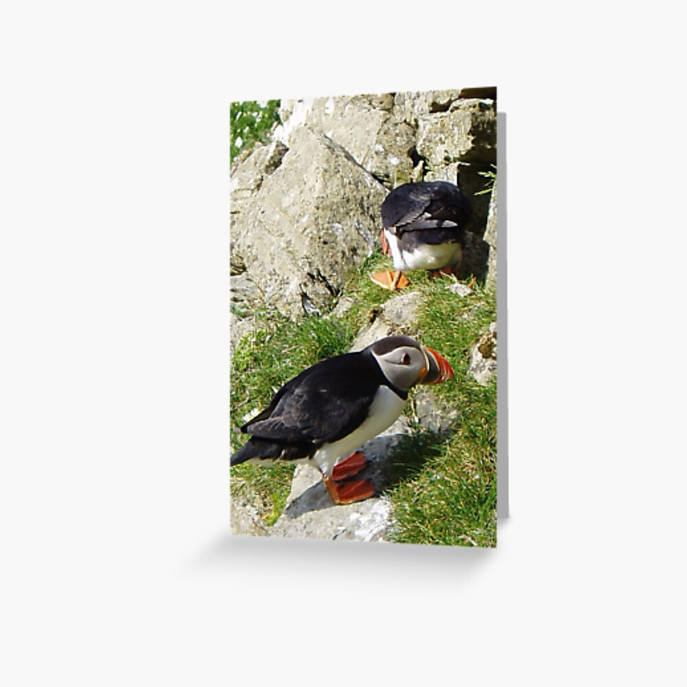 Puffin Hide-and-Seek Greeting Card