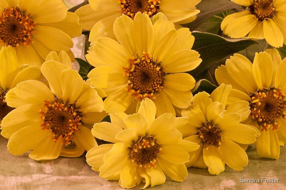 Yellow Toto Lemon Rudbeckia by Sandra Foster