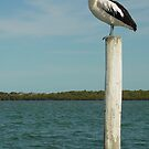 Pelican Pole by Jayson Gaskell