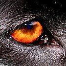 DOG EYE VISION by SofiaYoushi