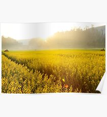 Sun shining bright on yellow flower landscape. Poster