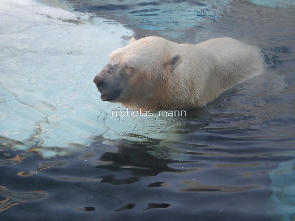 polar bear 3 by nicholas  mann