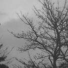 Black and White Trees by meggiemoo
