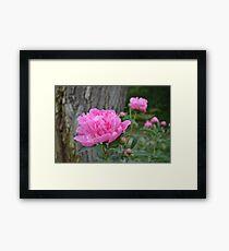 Pink Peony Garden Framed Print